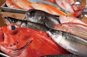 新鮮な魚を発送